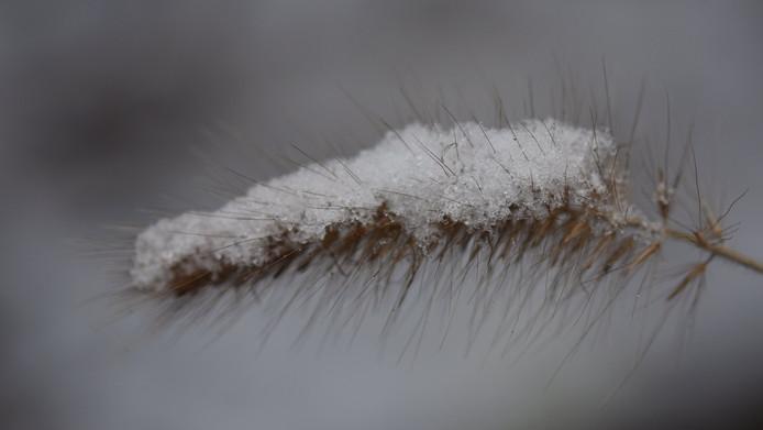 Gras met sneeuw in Arnhem