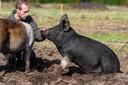 Verzorger Wesley bij de varkens