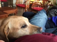 Labrador Lex geschept en voor dood achtergelaten in Enschede