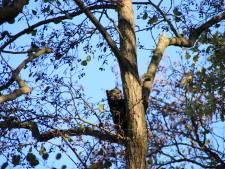 Brandweer Renswoude kijkt kat niet uit de boom: de spuit erop