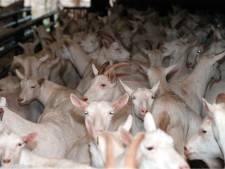 Veel vragen bij plannen voor grote geitenboerderij in Ottersum
