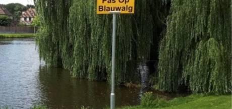 Lage Zwaluwe, Breda? Op deze plaatsen zit blauwalg in het water