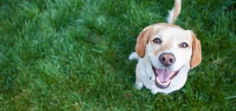 Almeerse hondeneigenaren verbaasd over nieuwe regels