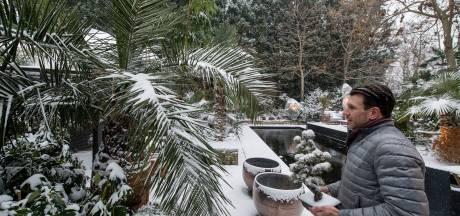Palmenparadijs in een IJzendoornse achtertuin