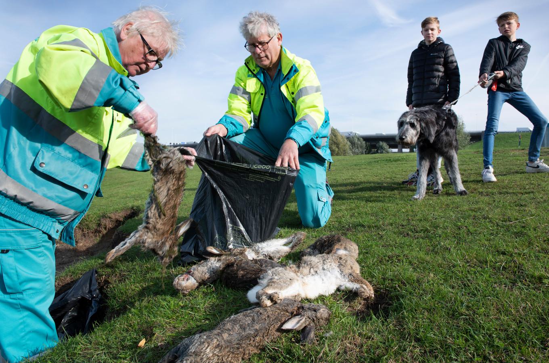 Eef Lindhout en Gerrit de Boom van de dierenambulance ruimen de dode konijnen langs de Lek.