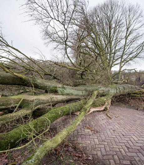 Eeuwenoude bomen in Hellendoorn gesneuveld door storm