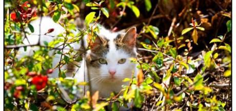 Dierenopvang zoekt onderdak voor wilde katten van Droomgaard