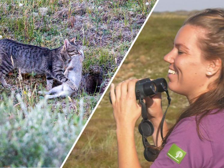 Texel maakt jacht op bloeddorstige zwerfkatten