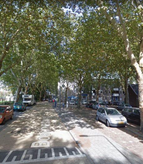 Beeldbepalende bomen langs de Boschveldweg gaan allemaal om, ProRail ziet geen andere mogelijkheid