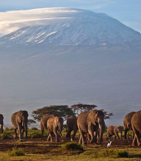 Brand op Kilimanjaro onder controle, vijf procent van park afgebrand