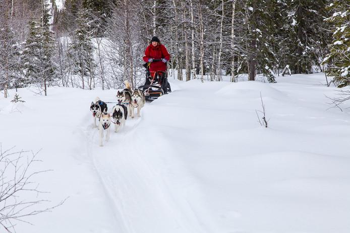 Hyls en Nies Heeringa met hun husky's in Noord Zweden.