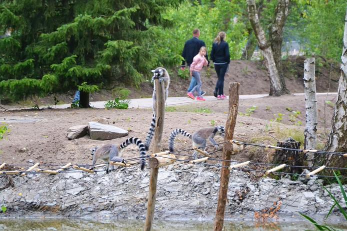 Edge of Africa, de nieuwe lus aan de wandelroute in het Safaripark.