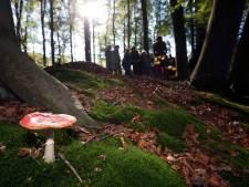 Kinderen als Sherlock Holmes in Voorstonden op zoek naar paddenstoelen: 'Alleen kijken, níét aankomen'