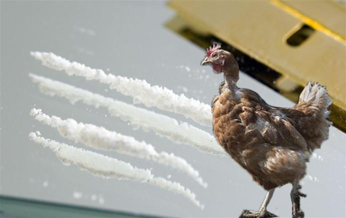 Tussen een lading kip werd ruim 65 kilo coke aangetroffen.