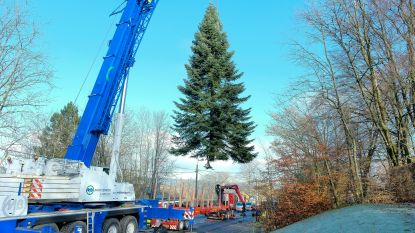 Deze kerstboom zal prijken op Grote Markt Brussel