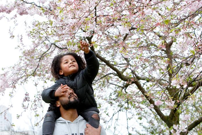 Met de stijgende temperaturen en een aangename voorjaarszon staan in een klap de bomen weer in bloei, zo ziet Kayden (4) op de schouders van zijn vader Jermaine in Katendrecht.