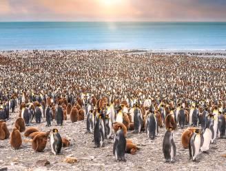Grootste ijsschots ter wereld op ramkoers met Zuidpool-eilandje: hongerdood dreigt voor duizenden dieren