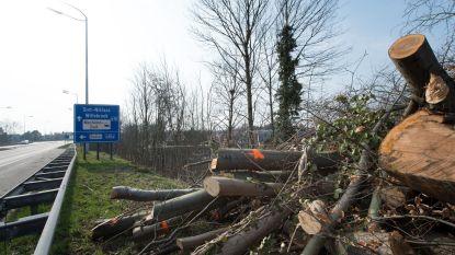 Oppervlakte aan gekapte bomen en struiken langs Vlaamse wegen verdubbeld in afgelopen vijf jaar