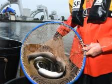 Sportvisserij Groningen Drenthe: 'Het reservaat voor palingen in de Westerwoldse Aa moet blijven'