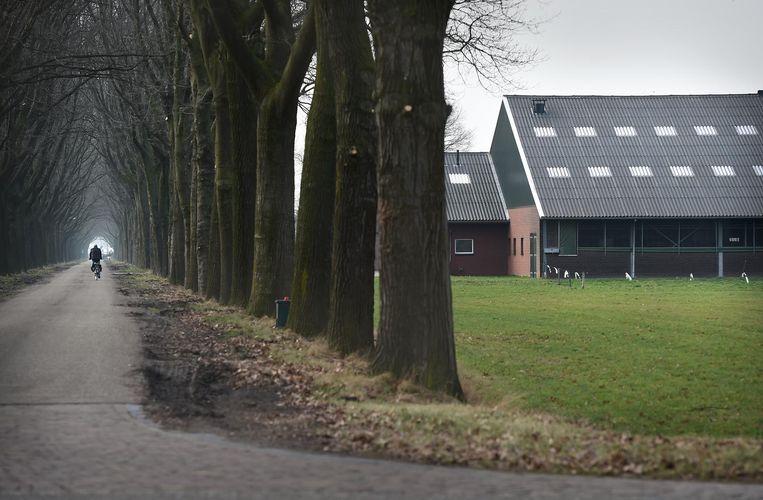 Intensieve veehouderij in Noord-Brabant. Beeld Marcel van den Bergh / de Volkskrant