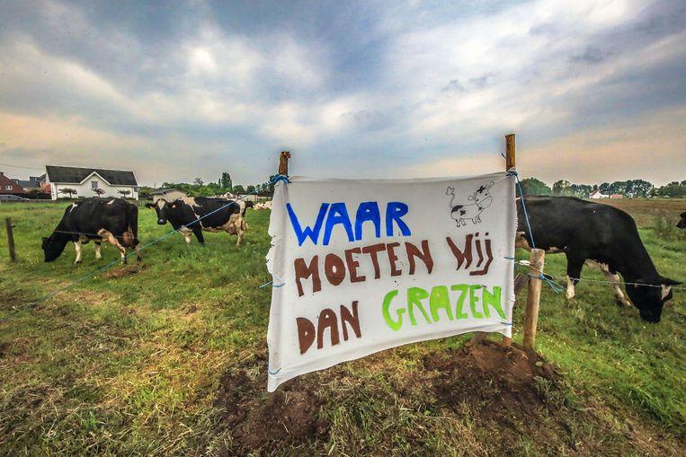 'Waar moeten wij dan grazen', lijken deze koeien zich af te vragen.