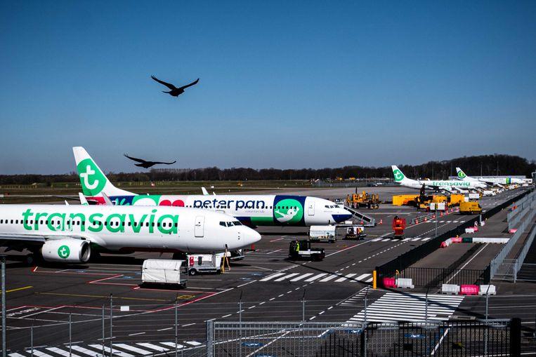 Vliegtuigen van Transavia staan aan de grond bij Eindhoven Airport. De luchtvaartmaatschappij Transavia schrapt alle vluchten vanwege de coronacrisis.  Beeld ANP
