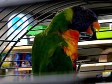 Zeldzame vogel vliegt tegen ruit dierenwinkel Dalfsen