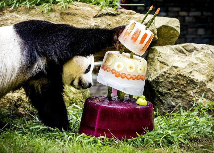 Reuzenpanda Xing Ya kreeg een ijstaart voor zijn vierde verjaardag, 1,5 jaar geleden.