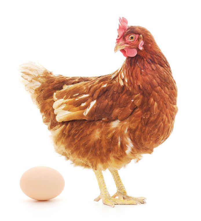 kip en ei cijferbalk