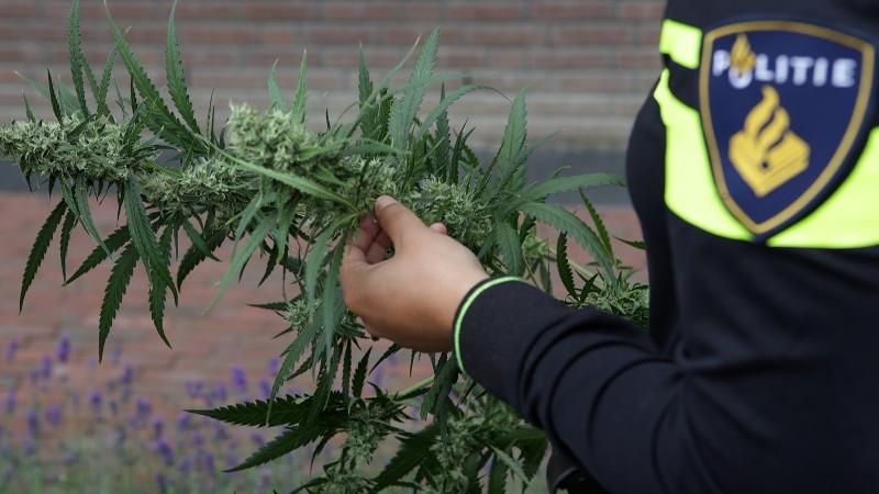 Een agent met een wietplant in zijn handen.