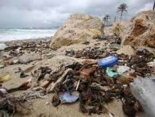 Stranden Palma de Mallorca sterk vervuild: zeewater te vies om in te zwemmen