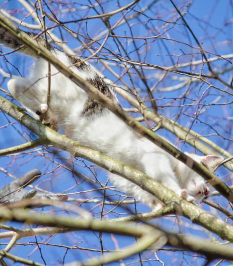 Bungelend katje houdt het ruim 48 uur vol in boom in Tilburg