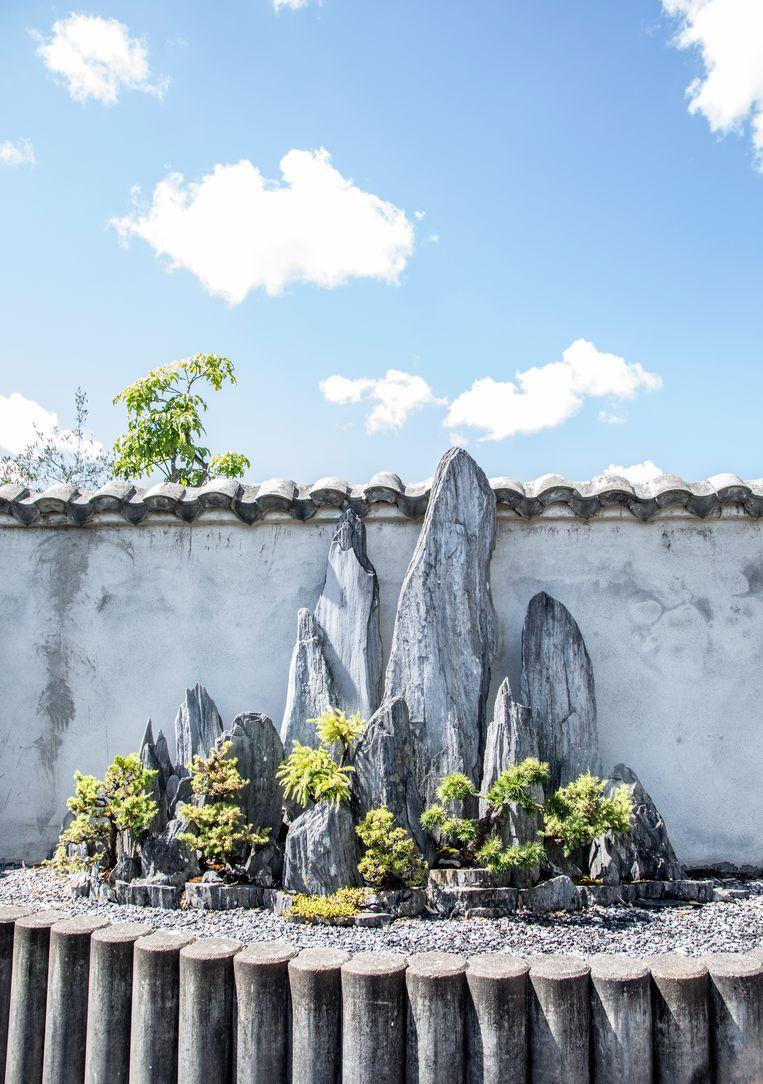 De Botanische Tuin Zuidas is de enige met een bonsai- en penjing-verzameling. Beeld Lotte Bronsgeest