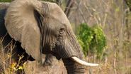 Meer dan 100 dieren vergiftigd in Krugerpark