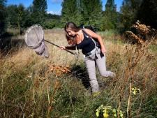 Wel 97 bijensoorten zoemen in en rondom groen Gorinchem
