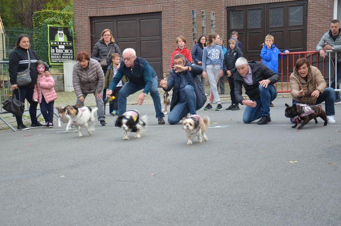 De ludieke hondenkoers in Appelterre.