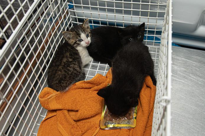 De kittens zijn overgebracht naar Dierentehuis 't Hart in Soest.
