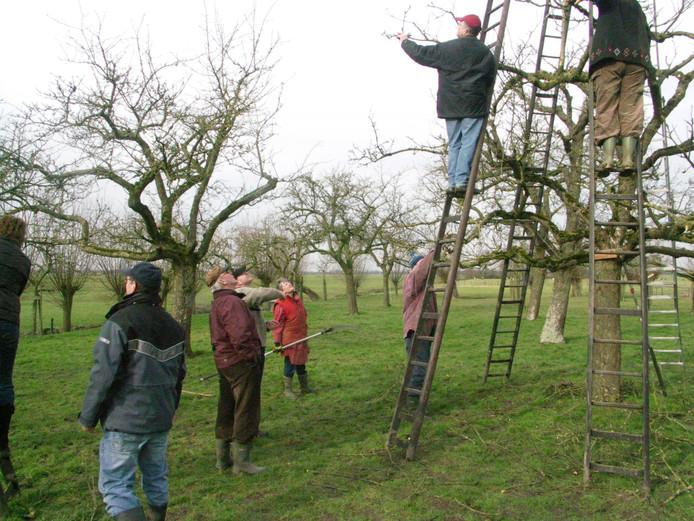 Vrijwilligers aan het werk in een hoogstamboomgaard.