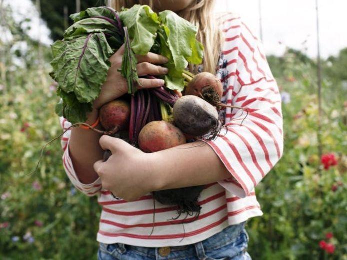 Cultiver soi-même ses légumes est une activité très amusante. C'est une façon très agréable de décompresser.