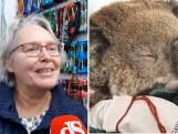 Hobbyisten maken massaal handschoentjes voor verbrande koala's