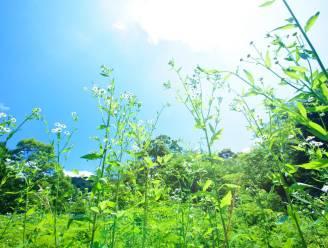 Limburgse landbouwers planten 190 hectare bloemen