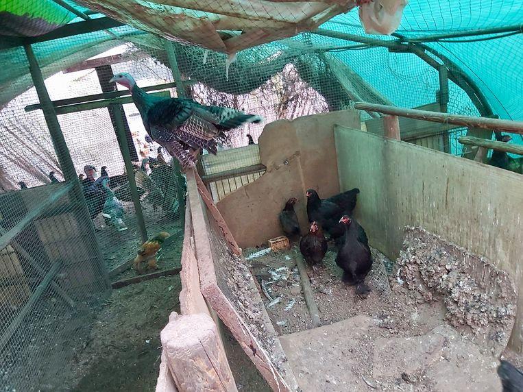 De dieren leefden in erbarmelijke omstandigheden en werden in beslag genomen.