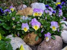 Tegels in de tuin zijn not done, de rotstuin is een goed alternatief