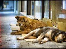Britse toeriste overlijdt in Griekenland na aanval door honden