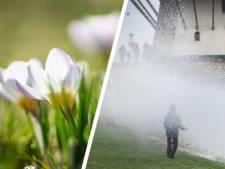 Zeeland heeft primeur: eerste 15 graden van 2020 gemeten in Westdorpe
