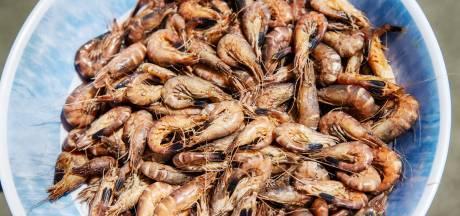 Amper nog gepelde garnalen te koop: zo pel je ze zelf