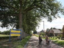 Voorst jubelt over aanplant andere bomen langs Rijksstraatweg