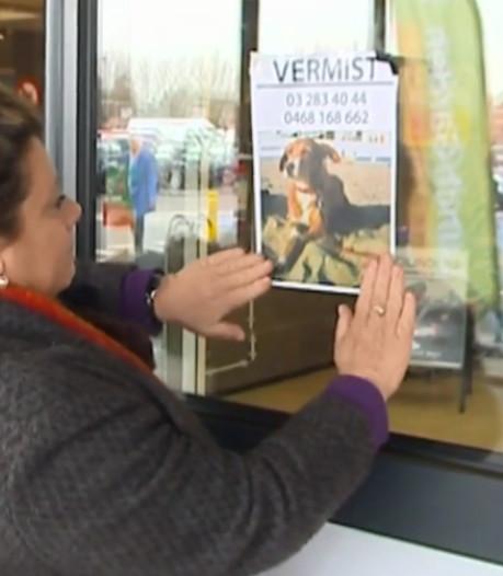 Na autodiefstal vermist Belgisch hondje teruggevonden in Amsterdam