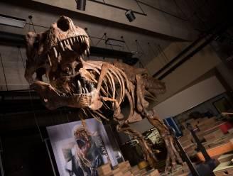 Grootste tyrannosaurus rex ter wereld ontdekt