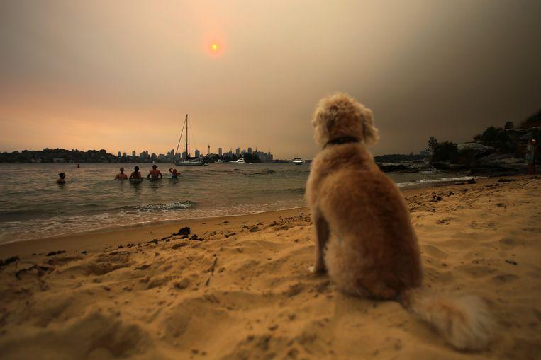 Een hond zit op Milk Beach, terwijl de lucht wordt verduisterd door rook van de naderbij komende bosbranden. Beeld EPA